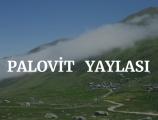Palovit Yaylası